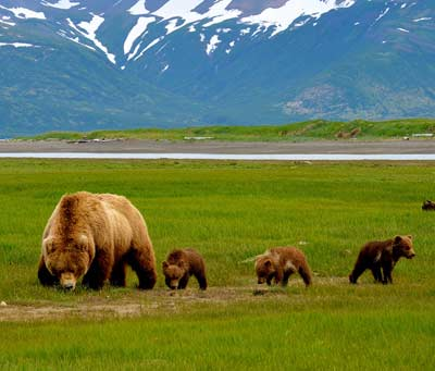 Alaska Bear Viewing Tours with Catch A Lot Charters Homer Alaska