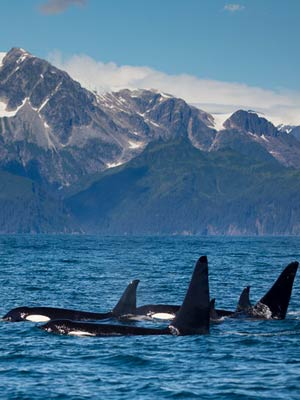 See Whales on out Alaska Bear Watching Trips - Catch A Lot Charters